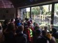 Yr4 Bristol Zoo 4